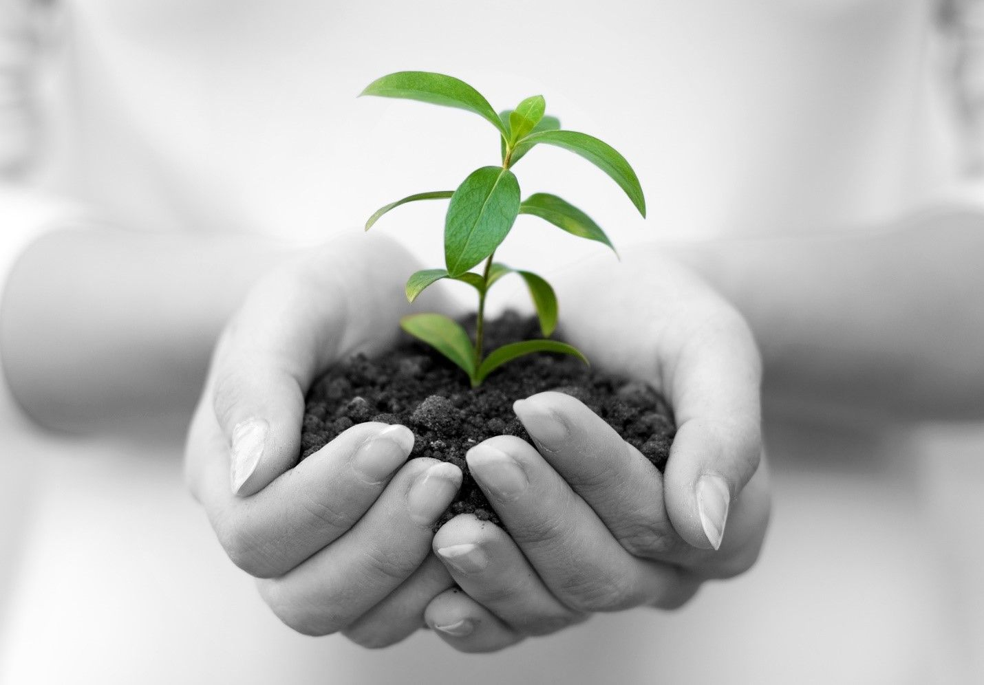 Taking Leadership in Planting Seeds of Kindess to Make the World a Better Place